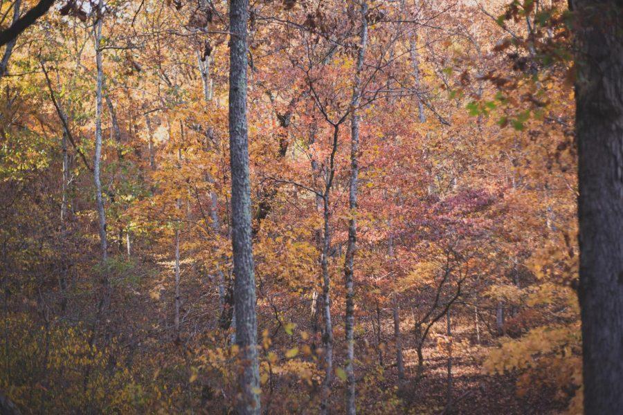 Fall+Favorites
